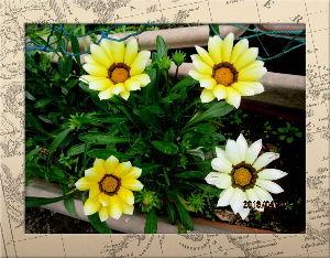庭の花で四季を楽しむことに・・・ 今日も爽やかな初夏の陽気に・・・  家内の白内障の検診日で病院まで送迎係りを・・・  病状は徐々に進