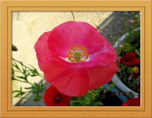 庭の花で四季を楽しむことに・・・ 寒気の影響なのか今朝は冷たかったね・・・・  陽射しが射しこんで徐々に暖かさが戻ったね・・・  夕方