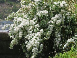 きらきらと。。。。。☆ こんばんは~! 今日は夜です。(*^▽^*) 午前はお仕事! 午後は、この前買ったお花を一部植え替え