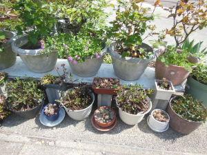 きらきらと。。。。。☆ 昼過ぎから本格的な雨降りになりました。 午前中に昨日貰った花苗の植え替えし、雨に打たせて少し時間を置