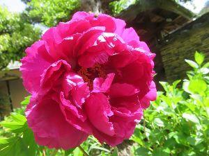 きらきらと。。。。。☆ こんばんは~! またまた登場です。(*^▽^*)  こむぎちゃん、ハナミズキもきれいに咲いてるよね。