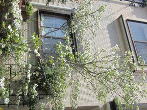 きらきらと。。。。。☆ おはようございます♪ 良いお天気ですよ~確かに風は冷たい!(*^^)v ニャンコと庭に出てましたが・