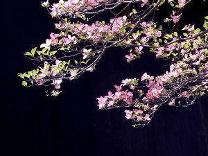 ★みんな!お友達になって~~(^_-)-☆★   皆さん、こんにちは。 今日も爽やかに晴れれましたが、日差しが暑いくらい、6月下旬の気温だとか。。