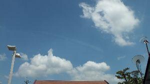野草に関する情報をお寄せください! 8月ですね~ 毎日暑く 毎夜熱帯夜・・・夏 真っ盛りです。  久しぶりに ぽっかり浮かんだ白い雲を見