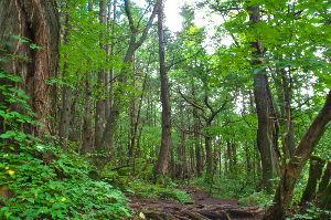 野草に関する情報をお寄せください! 少しだけ夏に戻りました。  蓼科大滝に続く原生林の遊歩道です。 手軽に行けて夏にはいいところです。広