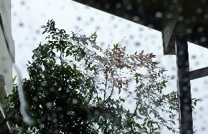 野草に関する情報をお寄せください! 立秋とは名ばかりの・・・ 明日の予想最高気温 36℃です。  明日 8日未明 部分月食が見られるとか