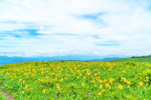 野草に関する情報をお寄せください! 昨日、ようやく青空が見えたので出かけてみました。 でも、少しずつ雲が増えてきます。  霧ヶ峰高原。