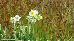 野草に関する情報をお寄せください! 七草も過ぎ 成人の日も過ぎ 今日から 本格的に始動する人も多いでしょうか。  この季節 土手道を走っ
