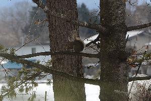 野草に関する情報をお寄せください! 皆様こんばんは、少しは春が近づいた気配がしますがまだまだ夜は寒くなります。 風邪も流行っているようで