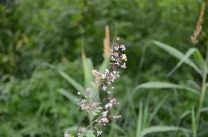 野草に関する情報をお寄せください! どこで撮ったか判らなくなりましたがきれいに咲いていました。