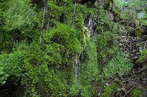 野草に関する情報をお寄せください! 湯ノ丸高原の近くにある「玉すだれの滝」です。 冷気(霊気)が漂う清々しいところです。
