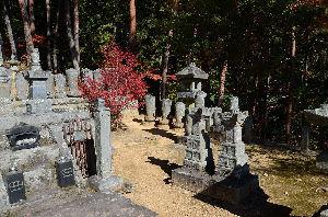 野草に関する情報をお寄せください! 真田昌幸の兄二人が眠る「信綱寺」で撮りました。 「長篠の戦い」で討ち死にした二人の首級を家臣が持ち帰