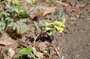 野草に関する情報をお寄せください! 優しい花ですね。