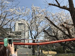ずっと一緒に☆.。.:*・゜☆ まだまだ花見には早すぎたかな〜〜 それでも たくさん咲いてる木もありました〜〜