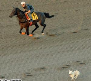孤高の勝負師 お馬さん🏇 今年3月1日からのデータ採り(9R~12R) 不的中は4日間なので、5日目からを勝負だが
