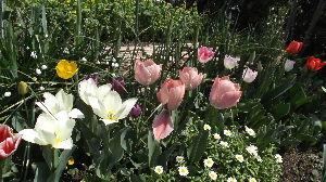 休憩(^.^)y-~~   女魔さんおはようございます 庭の花についた水滴で 水遊びをしている小鳥の姿を じっと眺めてるだな