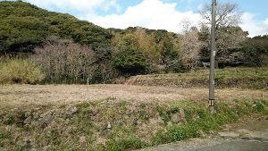 7707 - プレシジョン・システム・サイエンス(株) 草刈りボランティアは一昨日終わりましたよ。 神社の近くなので環境美化です。 地域の人々に可愛がられる