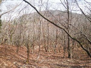鈴鹿山系 4/9日に足慣らしに根の平峠に行き、そこからタケ谷を下り、タケ谷出会から上水晶谷に出て 根の平峠に戻