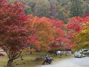 チョイ悪(かなり)ジジ  ババライダー 今晩は らくちゃんデス(北海道未到地)、 錦の紅葉きれいですね、雪は大丈夫でしたか。 寒くなります