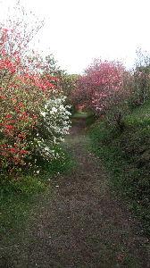 集まれ!宮崎の中高年ライダー! 今日は天気もよかったので出ないと損、損 ってことで近場を走りました  お目当ての芝桜はもう終わってま
