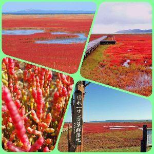 写真を撮る事が好きな関西人、珈琲をどうぞ… 天神さん、味のある写真ですね。(o^^o)  今日は、北海道網走の能取湖にサンゴ草の写真を撮りに来て