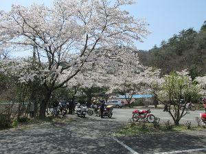 ∞少年少女∞ ∞田植え∞  >予想通りの葉桜見物となってしまいましたが  そら残念でしたね