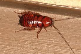 川柳でシリトリ遊び 食う物が   無いのにゴキブリ  生きている