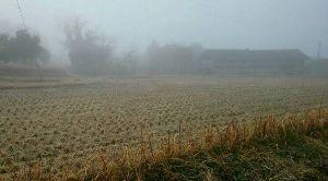 何となく♪  女性限定です♪ おはようございます。  先ほどから、あたりが霧につつまれてきました。外気温が上がるのでしょうか?