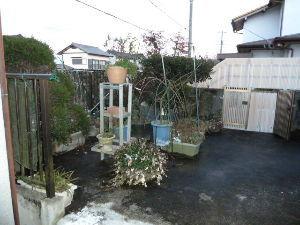 レイシ(ライチ?)、アボガドが芽を出した 今朝は薄っすらの白さで積雪ですが・・10日遅れって感じですね 夕方には全部溶けて濡れてる程度の岐阜で