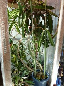 レイシ(ライチ?)、アボガドが芽を出した  kameさんも越冬・冬支度にゃ体力がきついご様子 重い鉢にはご油断なさらずも長年痛めた腰でしょうか
