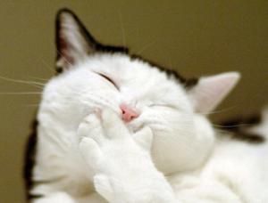 株の大勝会(会員制) 皆々様、本日もお疲れ様でした!