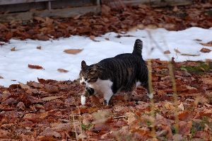株の大勝会(会員制) おはようございます!  暖かな日が続くとの予報なり。 ありがたし。  さてさて、枯れ葉パトロールに出