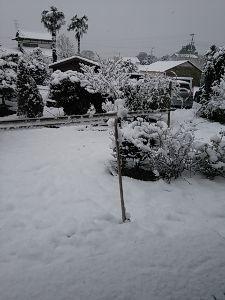 平成26天然2  『50代』(o^^o)♪ のっち、地方は又、雪が降ってる。明け方から、もう、積もってる(T_T)