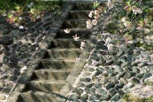フイルムカメラ日記 (たまにデジカメ) No.55コメントと同じ日の写真。 背景の階段と花の重なりをもっと調節したかったの だけど大型三脚に
