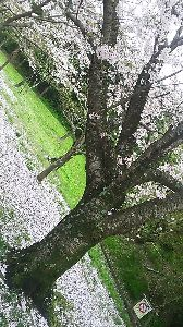 うさぎのちょむさんのちょむちょむメモ帳 そして、季節は移ろう。 新緑へ(^^)v