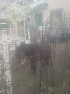 一般住宅庭で2頭の親子馬飼っている 宇都宮市 可愛かった