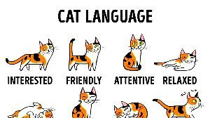 呆けとんのかな? *What is a language for us?  HOW TO UNDERSTAND YOU