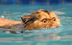 呆けとんのかな? How well can cats swim? - Quora  Cats can swim qui