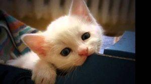 子猫下さい。 あなたも、かわいい子猫の写真を貼りましょう❗❗❗