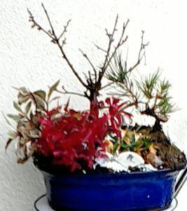 楽しく話しませんか?Ⅱ  ポムさん、   今日、一時間近く、時間を掛けて作った寄せ植えです。 正月飾りの為に、梅、笹、松は二