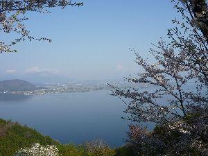 独居老人の一人旅 奥琵琶湖パークウェイの遅咲き桜