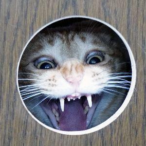 活力なべ使ってる方いませんか? ちょっと失礼して  みるちゃんの大口の写真を見つけたので保存してから 貼りつけます  前歯がなくなっ