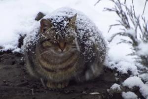 孤高の勝負師 野良猫のニャンコ🐈 降り積もる雪に耐えながら「生きる!」ことを精一杯に頑張っている😢  人間に限らず