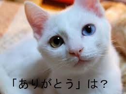 麻生の言うとおり、日本はナチの手法を既に使っている。 総連に対する税金の減免や伊賀市や四日市市在住の在日への住民税減免措置、掛け金を払わない在日への年金(