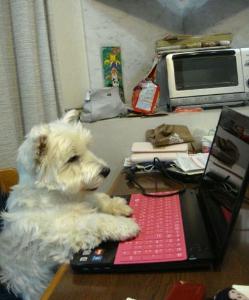 8411 - (株)みずほフィナンシャルグループ 犬: 1Kでそんな本置けるか