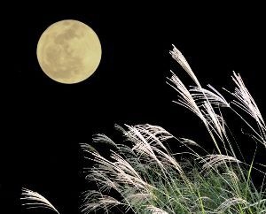 女性がつぶやく 五 七 五 今夜です  中秋の月  満月の  今朝はよく晴れています。今夜は月見が出来そうです。