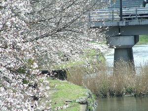 美祢食堂 美祢市には田舎ですが秋吉台が有ります  温泉も有るのですが・・・・・・  後は化石の産地です  春に