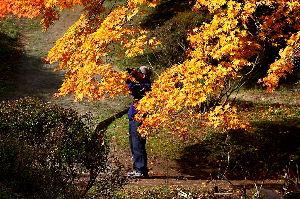 ★★★春夏秋冬四季の写真でシリトリ★★★ 今日は、遅くなって済みませんでした、  「登山道」の「う」に繋ぎます。  「美しい紅葉も終りですね」