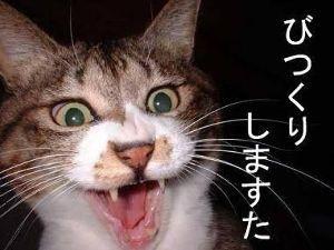 3932 - (株)アカツキ 俺の煽りごときで相場が動くんやったら  簡単やねんケドなぁ〜WWW  「ウルちー」と改名したろかなW