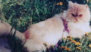 7201 - 日産自動車(株) ぴん子ちゃん  うちの子もフレディです。 こんな風に家の庭で散歩させていた ある日のこと、「犬? じ
